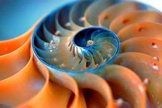 Nautilus spiral...