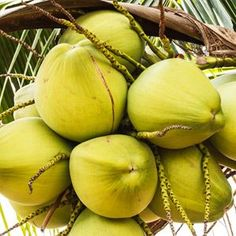 The many wonders of coconut oil: How this natural oil can do everything from hydrate skin to improve acne to anti-age. Natural Coconut Oil, Coconut Oil For Acne, Benefits Of Coconut Oil, Organic Coconut Oil, Natural Oil, Natural Skin Care, Natural Healing, Coconut Oil Hair Treatment, Coconut Oil Hair Growth