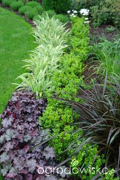 Organic Gardening At Home Garden Design Plans, Garden Landscape Design, Small Garden Design, Outdoor Plants, Outdoor Gardens, Shade Garden Plants, Front Yard Landscaping, Southern Landscaping, Small Gardens