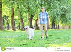 Young Man Walking His Dog In A Park Stock Photo - Image: 40984869