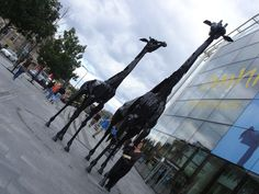 Because you love being greeted by these guys on your way to Elm Row.