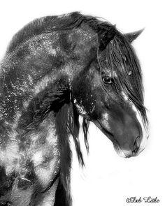 Washakie's Dream - Wyoming Wild Stallion wild horse mustang