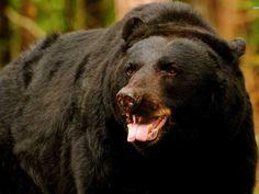 Sloth Bear Sanctuaries in India @ Sanctuariesindia.com