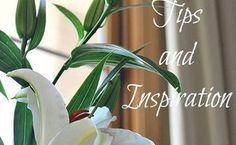 guidelines for spring cleaning, cleaning tips, seasonal holiday decor