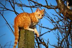 Cat, Kitten, Mackerel