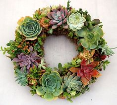One of the better succulent wreaths I have seen. Love the mix of colors.