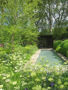 swimming pool surrounded by flowers