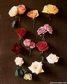 Do you know what type of rose is your favorite? Browse 30+ different types of blooms to find the one you want for your wedding