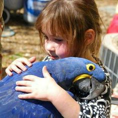 Hyacinth Macaw...so sweet, so big <3 It is the largest of all the Macaws.