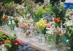 meadow and wild flowers