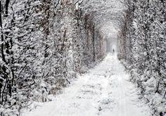 El Túnel del Amor en Kleven, Ucrania - POP-PICTURE: Tu Mundo En Imágenes