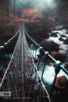 Go to the mysterious world by HansonMao  Taiwan Yilan bridge creek forest mysterious river stream woods world HansonMao