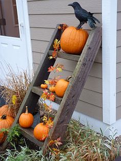 Fall Ladder...with punkins', leaves, & a...crow.