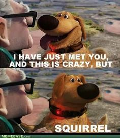 call me maybe squirrel. Got a laugh outta this one lol Call Me Maybe, Baymax, Funny Shit, The Funny, Funny Stuff, Funny Things, Freaking Hilarious, Random Stuff, Awesome Stuff