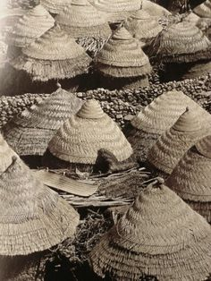 Roofs in #Cameroon From René Gardi book