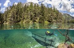 The underwater park, thick cluster of trees and snow-capped mountains are pictured. (REX/Marc Henauer/Solent News) | Austria's underwater park: The green space which is flooded under 12m-deep waters once a year - Yahoo! News UK