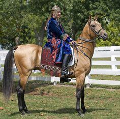 Dun Akhal-Teke Horse