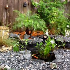 My backyard koi and goldfish pond