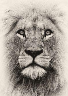 Spirit Lion by Rudi_Hulshof via http://ift.tt/1U7EoPa