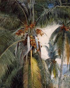 Winslow Homer, Coconut Palms, Key West, 1886 Watercolor on ArtStack #winslow-homer #art