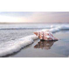 Sea Shell Art- Beach Photography Home Decor Nautical Beach Home Decor... ($55) ❤ liked on Polyvore