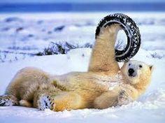 #funny ice bear