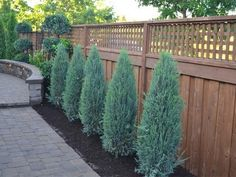 Rain and snow are going to play a huge part in your yard landscaping decisions. For example you will have to plan for your yard landscaping with care. Blue Arrow Juniper, Blue Point Juniper, Landscaping Supplies, Fence Landscaping, Privacy Trees, Columnar Trees, Foundation Planting, Landscape Services, Trees To Plant