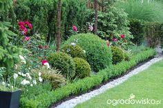 Ogród dla roślin o mocnych nerwach - strona 451 - Forum ogrodnicze - Ogrodowisko