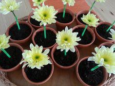 Viera´s Kitchen: Schoko- Cupcakes im Blumentopf