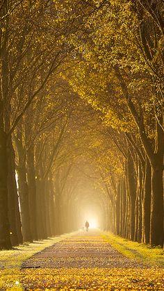 Golden Lane by larsvandegoor.com, via Flickr