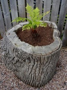 New Backyard Playground Design Tree Stumps Ideas - All For Garden Log Planter, Garden Trees, Tree Stump Planter, Wood Planters, Planters, Natural Playground, Garden Yard Ideas, Diy Backyard, Garden Design