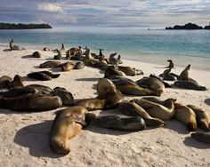 Most pristine places in the world.  Galapagos Islands. The archipelago is home to giant tortoises, iguanas, sea lions, penguins, whales and fish and has been a biological marine preserve for fifty years. It is home to a human population of only 23,000 and has hundreds of endemic species of plants and animals.