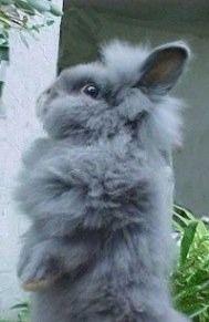 Classy rabbit