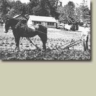 Harvests of Prince Edward Island : Potato Industry : History : Past