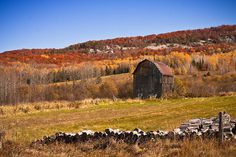 Fall Barn in Sault Ste Marie