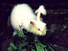 More on: http://schattenglanz.blogspot.de/2015/06/pic-dont-follow-rabbit.html