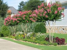 Deep purples look lovely in beds, especially when contrasted with perennials in yellow/gold and pink (such as these crepe myrtles). Always add a touch of white, says Danna Cain, a garden designer and co-owner of Home & Garden Design in Atlanta. Crepe Myrtle Landscaping, Landscaping Along Fence, Backyard Landscaping, Landscaping Ideas, Crepe Myrtle Trees, Home Garden Design, English Country Gardens, Colorful Garden, Flowering Trees