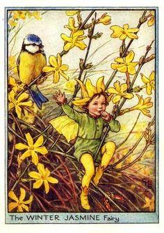Winter Jasmine Flower Fairy Vintage Print, Cicely Mary Barker-printed c.1950 – The Winter Jasmine Flower Fairy is one of Cicely Barkers Garden Flower Fairies.