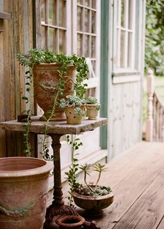 succulents in clay and stone pots
