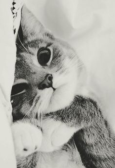 Cute close up of kitty in black and white photo