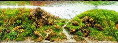 Friendly Mountain by Pablo de-Amorim Goes. Plants : ludwigia brevips; rotala indica; rotala rotundifolia; rotala green; ludwigia repens; limnophila vietnan; Calitriche Stagnalis; eleocharis japan; eleocharis minima; glossostigma; blixa viet; rotala narjechan; hydrocotyle sibthorpioides mini; Taxiphyllum barbieri (musgo java); Flame Moss – Taxiphyllum sp; Planta Ludwigia Glandulosa; Staurogyne repens.