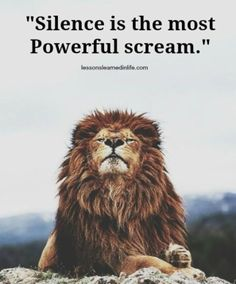 Lion About: The lion is one of the four big cats in the genus Panthera and a member of the family Felidae. Beautiful Creatures, Animals Beautiful, Cute Animals, Beautiful Lion, Wild Animals, Baby Animals, Gato Grande, Lion Quotes, Tier Fotos