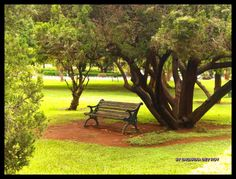 Lalbagh(A Botanical Garden in Bangalore)