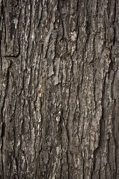 Textures Vol. 2 Free Stock Photo Collection  texture-vol2-tree-bark-close-up-free-stock-photo