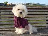 Puppy Catwalk - Luxury canine couture | Tienda online, prendas para ...