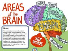 The Adventures of Ned the Neuron app to teach little ones about neuroscience. Brain Based Learning, Whole Brain Teaching, Stem Teaching, Brain Science, Brain Gym, Brain Food, Science Fair, Science Education, Physical Education