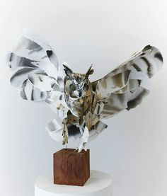 Long Eared Owl by Anna-Wili Highfield