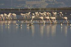 Hortas, Tagus estuary Visit Lisboa, Yellow Wagtail, Golden Plover, Aquatic Birds, White Egret, Nature Adventure, Nature Reserve, Natural Wonders, Ecology