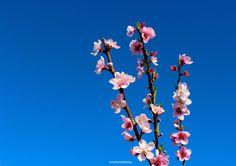 Spring at Babylonstoren