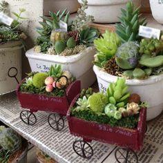 Hanging Succulents, Succulents In Containers, Succulent Arrangements, Succulents Diy, Succulent Gifts, Succulent Terrarium, Small Garden Fairies, Indoor Mini Garden, Inside Plants